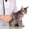 Ветеринарные клиники в Пинеге